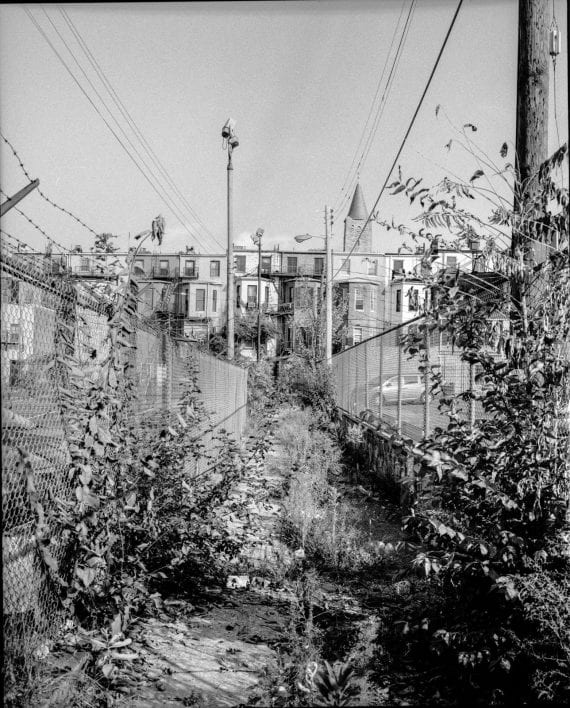 Photo of alleyway with overgrown weeds